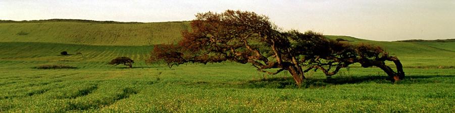albero_901